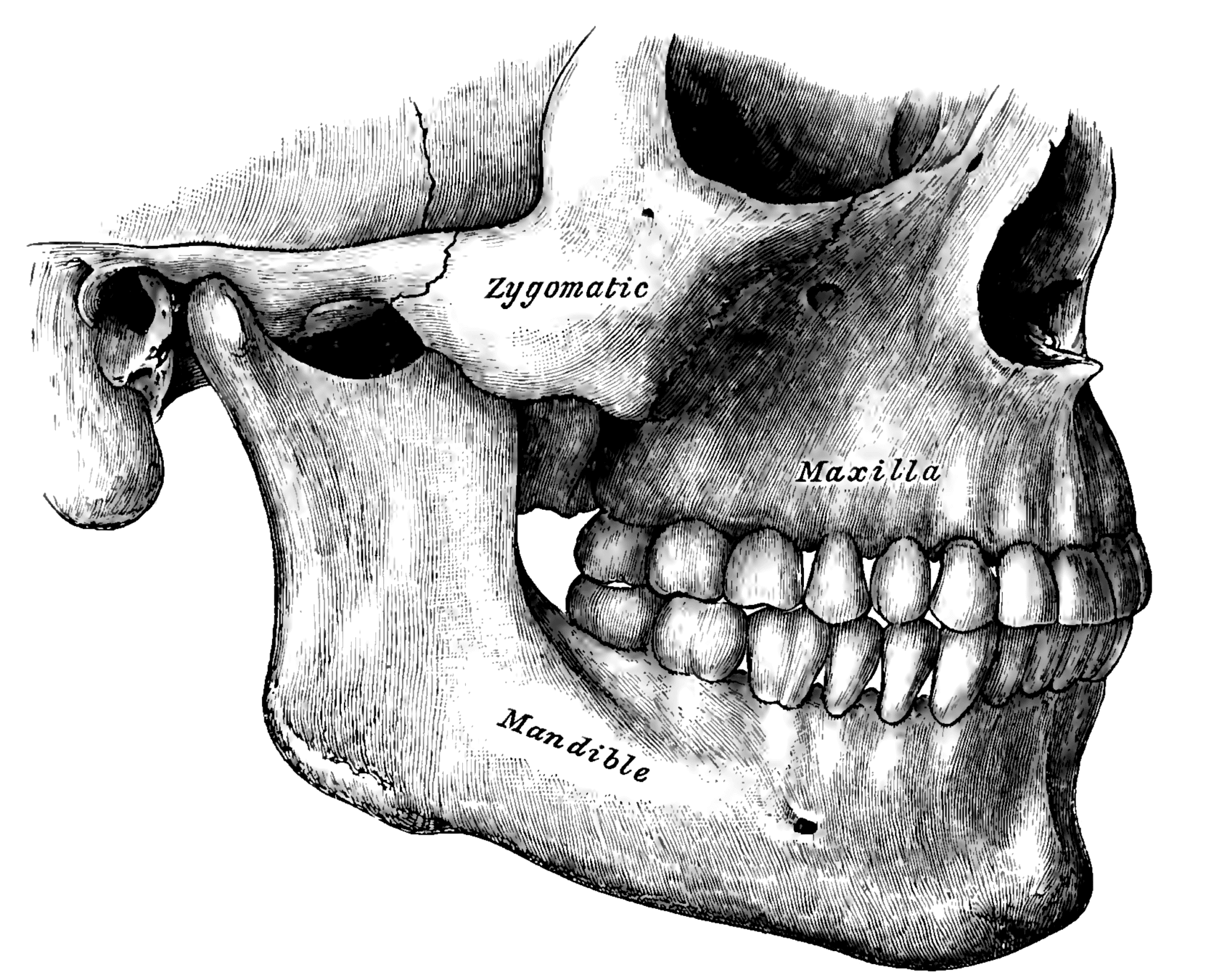 Temporomandibular Disorder